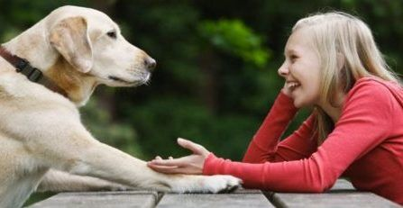 Animal-Communication-Classes-Advanced-Animal-Communication