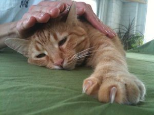Practice Reiki for Animals