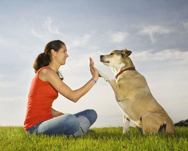 Animal Reiki for Reiki Practitioners Level 2
