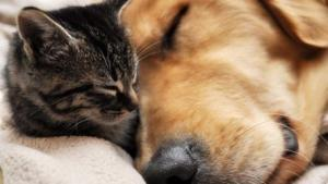 kitten and dog snuggling