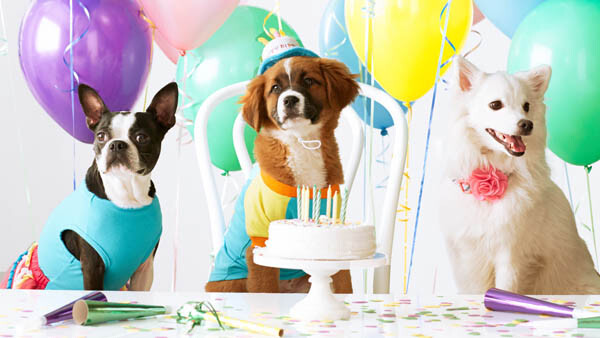Animal Communication Parties & Pet Psychic Parties
